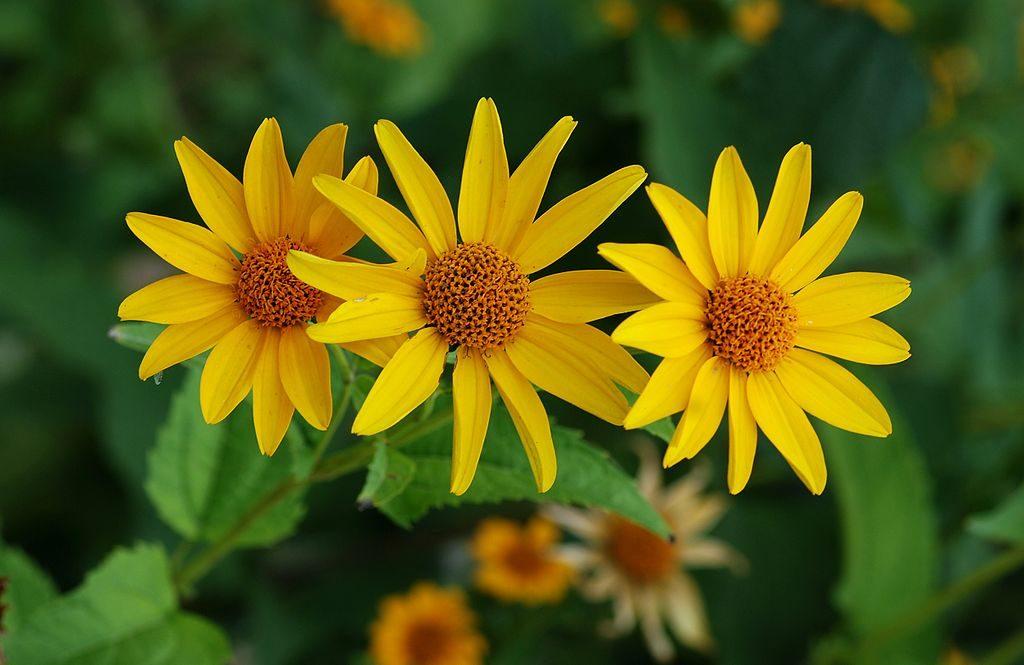 Flores amarillas im genes y fotos - Tipos de flores silvestres ...