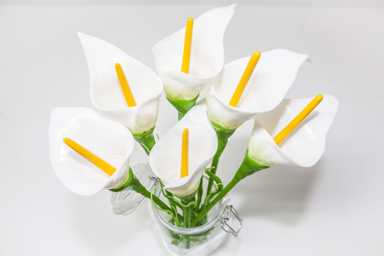 Fotos de flores blancas 66