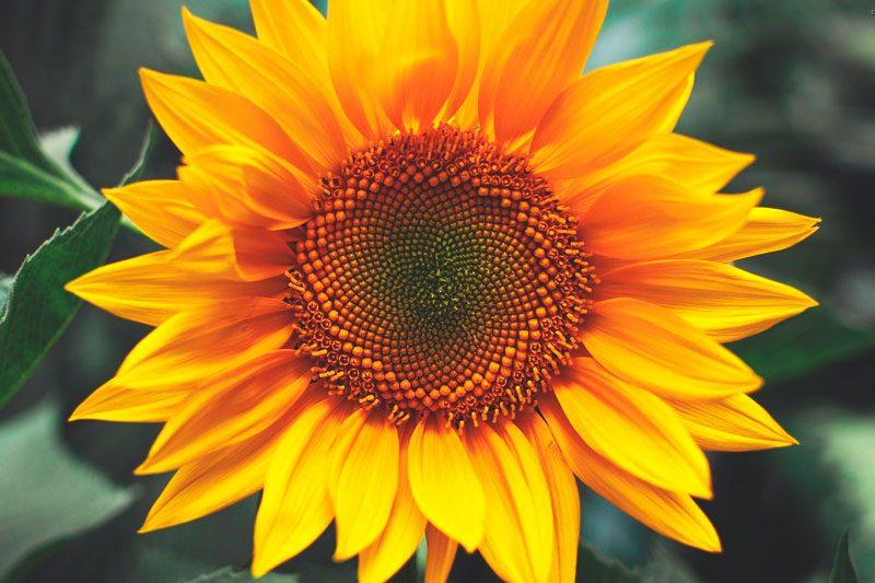 las 15 flores m s bonitas con fotos florespedia