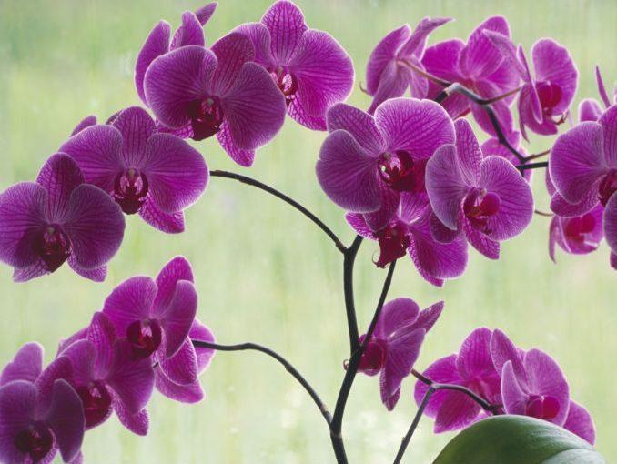 Flores bonitas: orquídeas