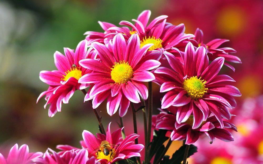 Las 15 Flores Ms BONITAS Con Fotos Florespedia