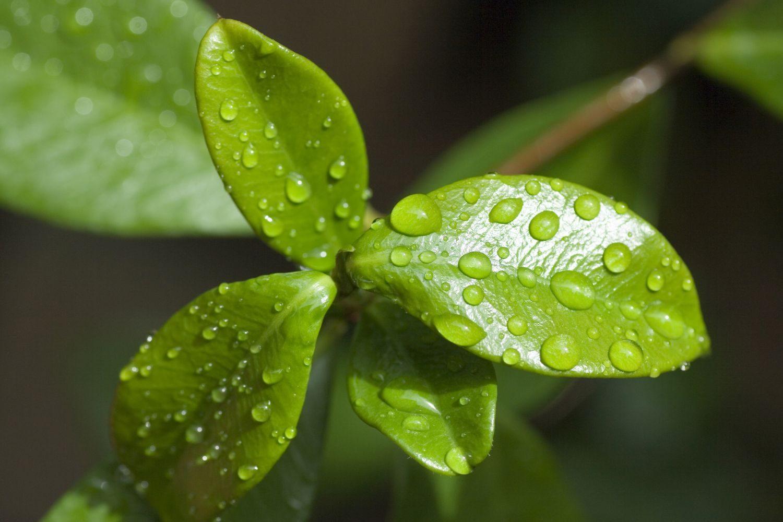 Respiracion De Las Plantas Gif: La Respiración De Las Plantas Y Fotosíntesis