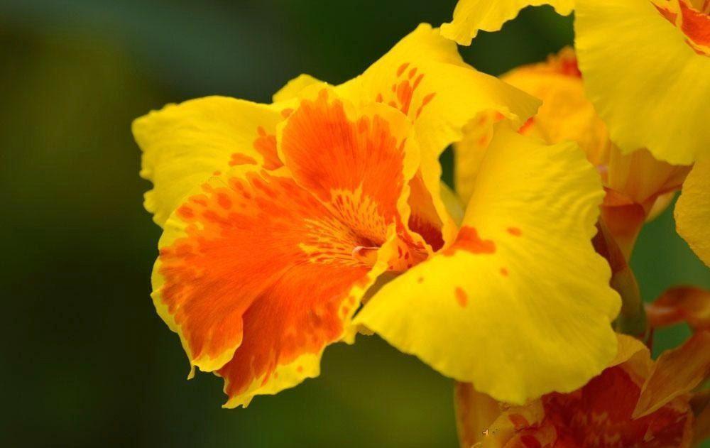 Lista de flores bonitas claveles im genes y fotos - Fotos de flores bonitas ...