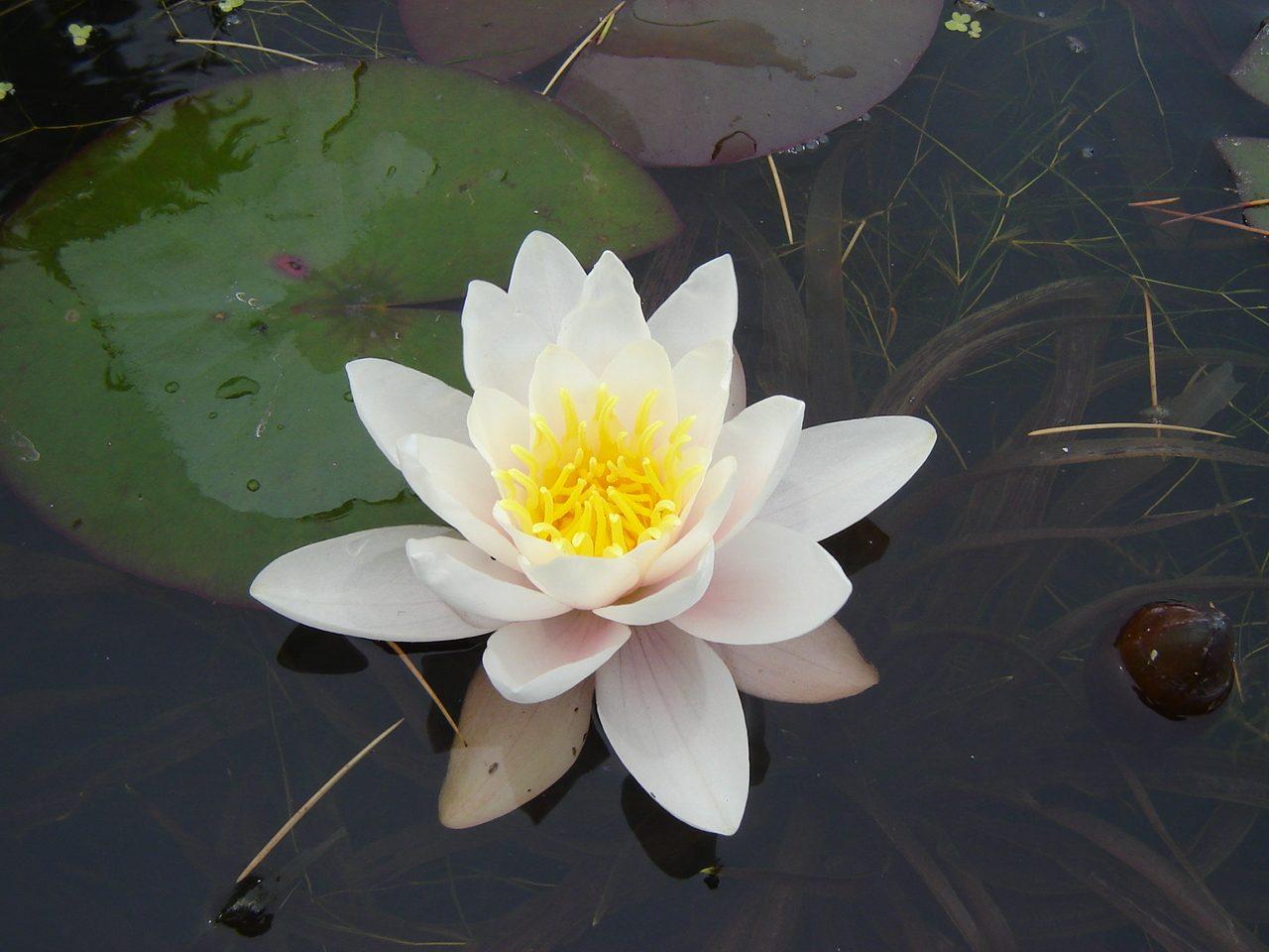 Nen far blanco im genes y fotos for Imagenes de jardines con estanques