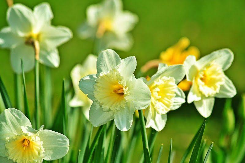 Nombre De Flores Bonitas Cannas Indicas Imagenes Y Fotos