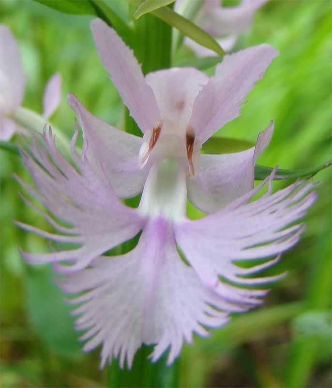 Orquídea HD :: Imágenes y fotos