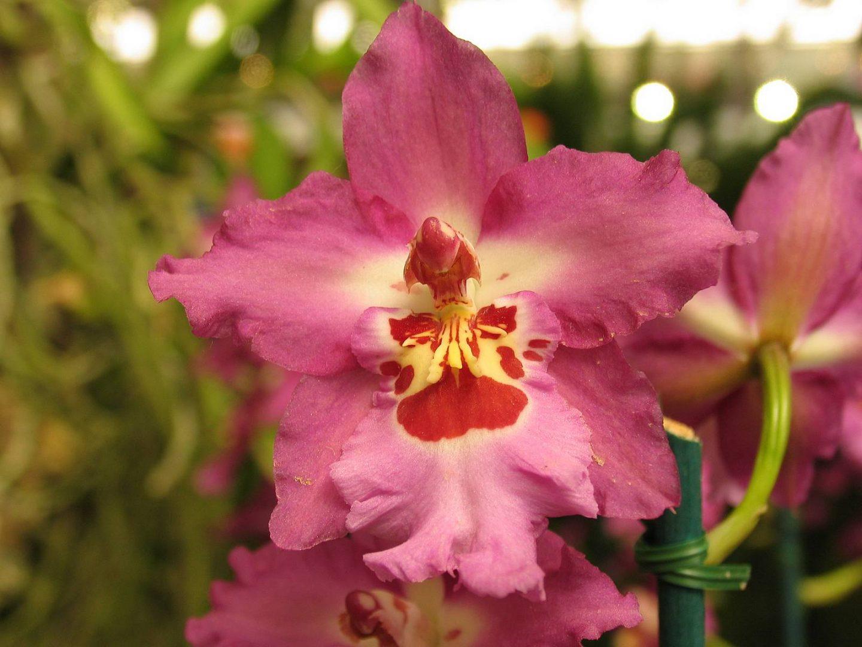 Galería de imágenes: Orquídeas