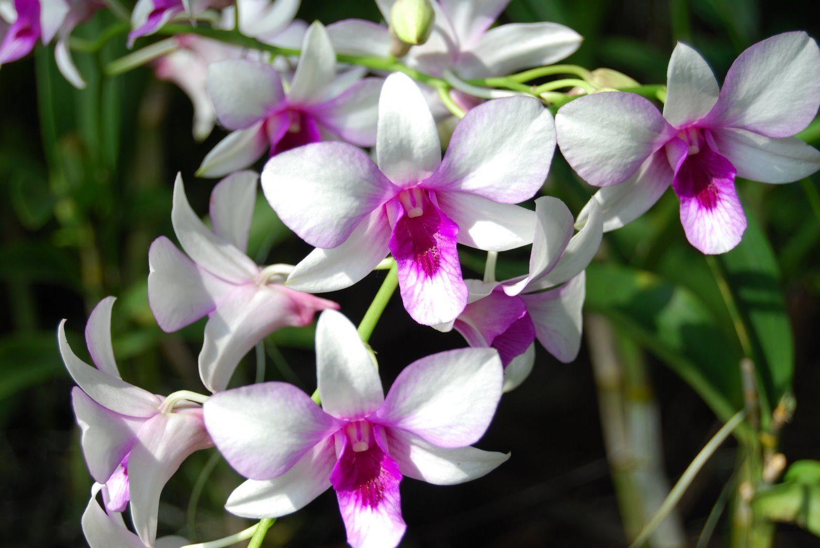 Resultado de imagen para orquideas blancas