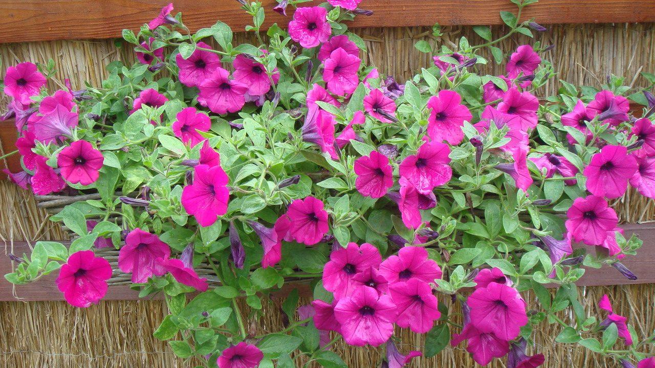 plantas herbáceas de tipo perenne que forman parte de la familia de