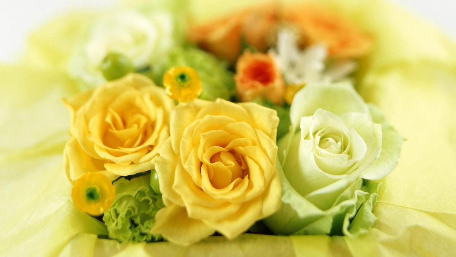 Rosas amarillas y blancas :: Imágenes y fotos