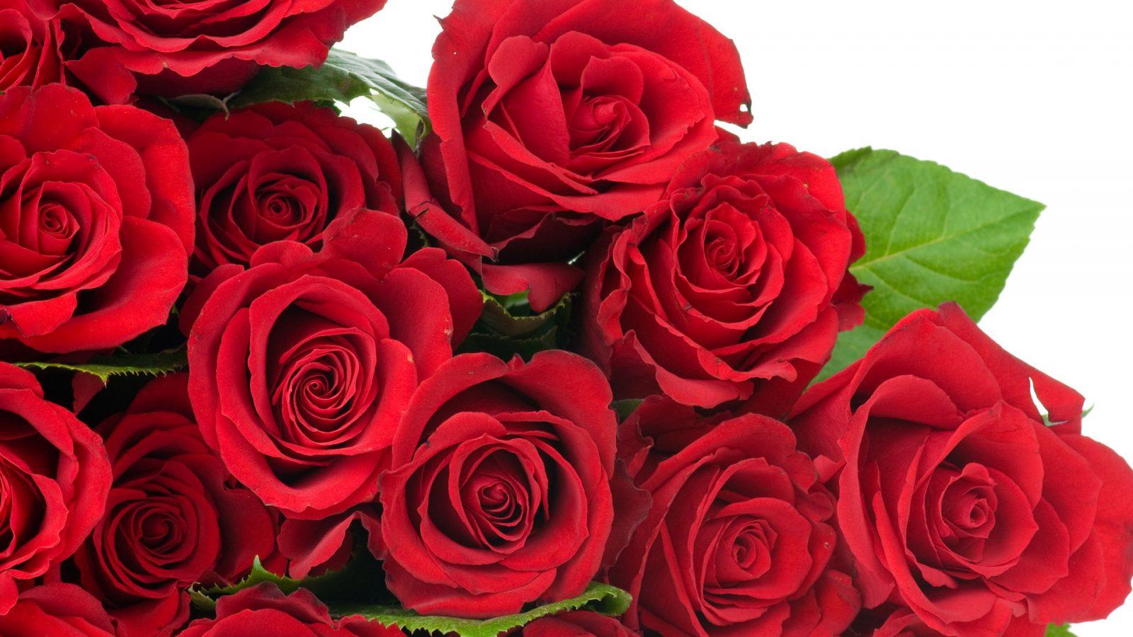 Galería De Imágenes Rosas