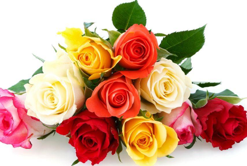 Tipos de flores bonitas: rosas