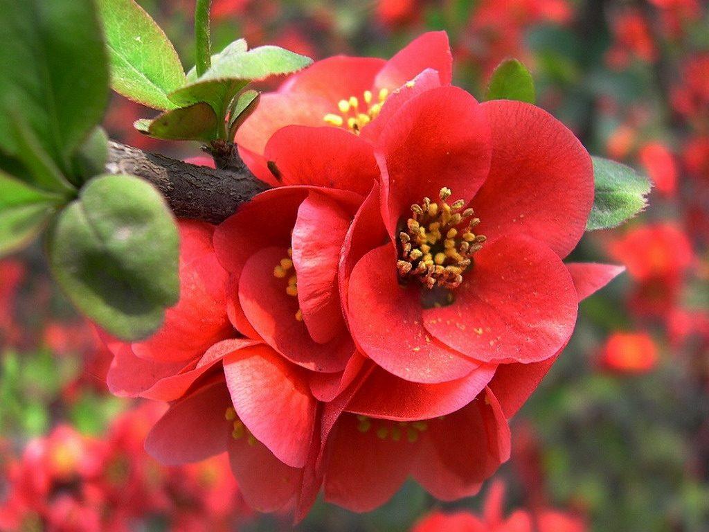 Begonias en la naturaleza
