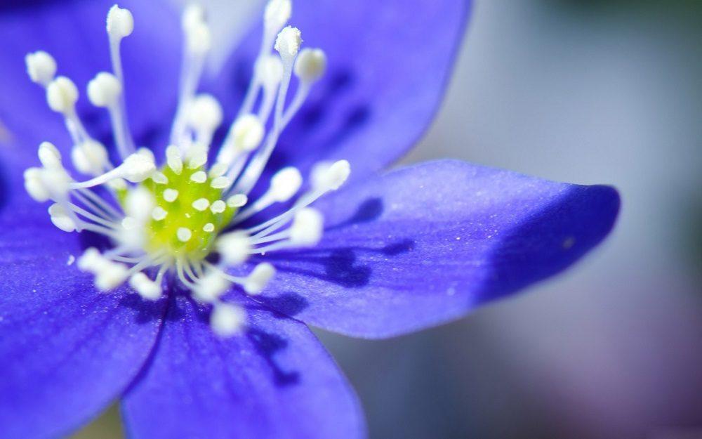 Flores azules - Tonos azules ...