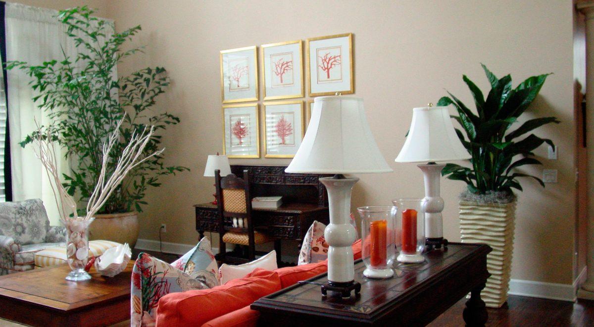 Plantas decorativas interior plantas plantas de - Plantas decorativas de interior ...